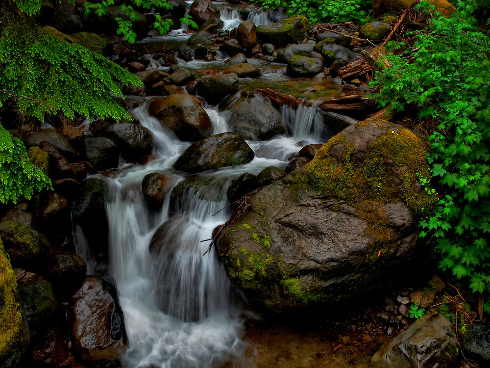 Just Drop In ~ Oregon Cascades ~ by Charles & Patricia   Harkins ~ Picture Oregon
