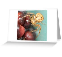 blackberry spider Greeting Card