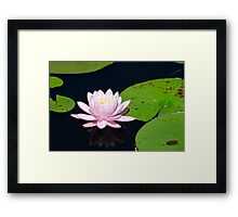 Pink Water Lily on the Ipswich River Framed Print