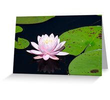 Pink Water Lily on the Ipswich River Greeting Card