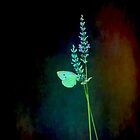 Butterfly and flowers..... by DaveHrusecky