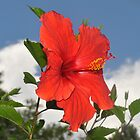 Hibiscus in the Sky  by Elaine  Manley