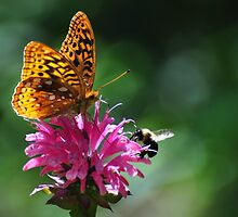 Bee and butterfly on bee balm by mltrue