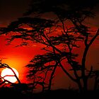 Serengeti sunset by andreaminerdo