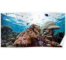 Bunaken Marine environment Poster