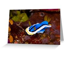 nudibranch in the garden Greeting Card