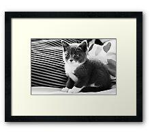 Kitten IV Framed Print