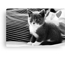 Kitten IV Canvas Print