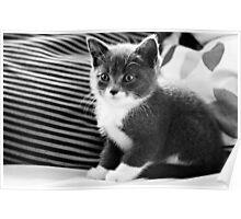 Kitten IV Poster