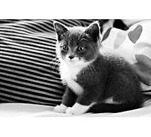 Kitten IV Photographic Print