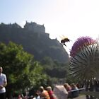 Thistle Bee Edinburgh Castle by johnbanchory