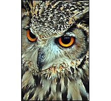 Indian eagle owl Photographic Print