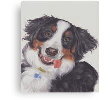 Such a Silly Face Canvas Print