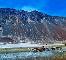 The Beauty of Nature in Laddakh-2/2011 by Mukesh Srivastava