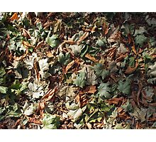 Top view of the green and brown fallen leaves of maple and chestnut Photographic Print