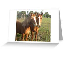 Horse Buddies Greeting Card