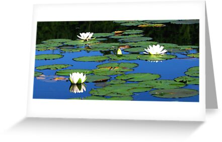 Water Lilies at Laurel Lake by AngieDavies