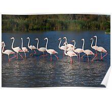 Marching flamingos Poster
