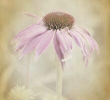 Dusky Echinacea by OpalFire