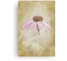 Dusky Echinacea Canvas Print