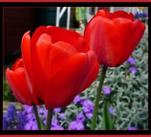 Red Tulips by Fay Hartwell