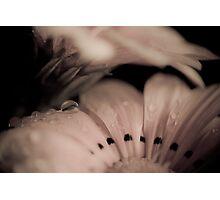 Daisy in macro Photographic Print