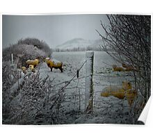 Sheep In The Snow Poster