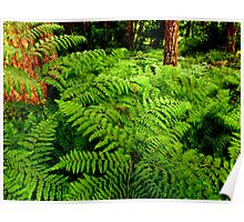 A Forest of Ferns Poster