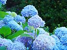 Botanical Summer Garden Pastel Hydrangea Flowers art by BasleeArtPrints