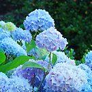 Botanical Summer Garden Pastel Hydrangea Flowers art by BasleeArtPrints
