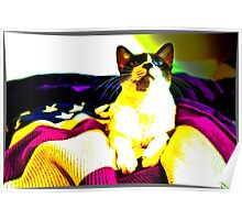 Freedom Cat  Poster