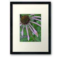 Orange bug on Purple Coneflower Framed Print