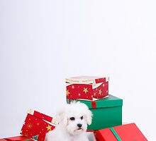 What do you want for Xmas ???? by Nina  Matthews Photography