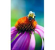 Sunday Brunch in the Garden Photographic Print
