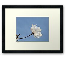 Floral art White Magnolia Tree Flower prints Blue Sky Framed Print