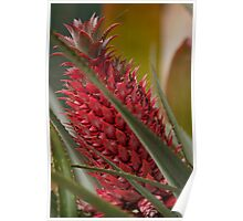 Red Pineapple South East Queensland Poster