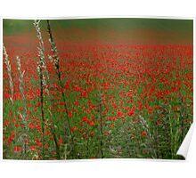 Poppy Fields. Poster