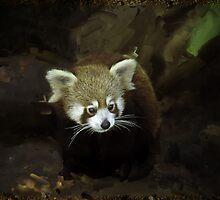 Red Panda by BoB Davis