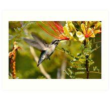 Hummingbird Dining Art Print