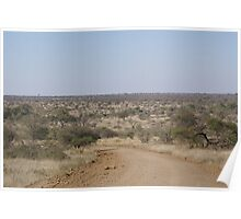 Gravel road winding through the African Bushveld - Kruger National Park Poster