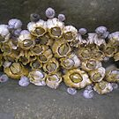 barnacles by Heather Rowe of Oil Water Artt