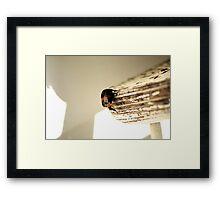 Resting Spot Framed Print