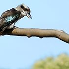 Kookaburra sits in the old gum tree... by Samantha Lennon-McFadden