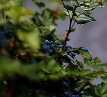 Blue Berries by Kelli Dubay