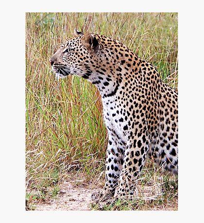 PERFECT CREATION - THE LEOPARD - Panthera pardus Photographic Print