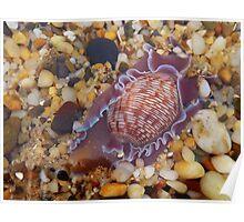 'Sea Snail' Poster
