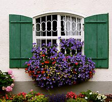 Purple flowers in window boxes by Laurel Eby