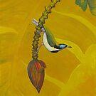 Banana Blue Face by Cary McAulay