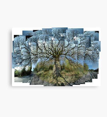 Old Oak, Morning, Argyll Canvas Print