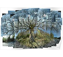 Old Oak, Morning, Argyll Poster